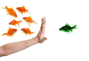 discrimination fish