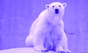 negative thoughts purple polar bear