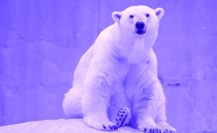 negative thoughts polar bear