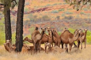 NLP is like the 18th camel